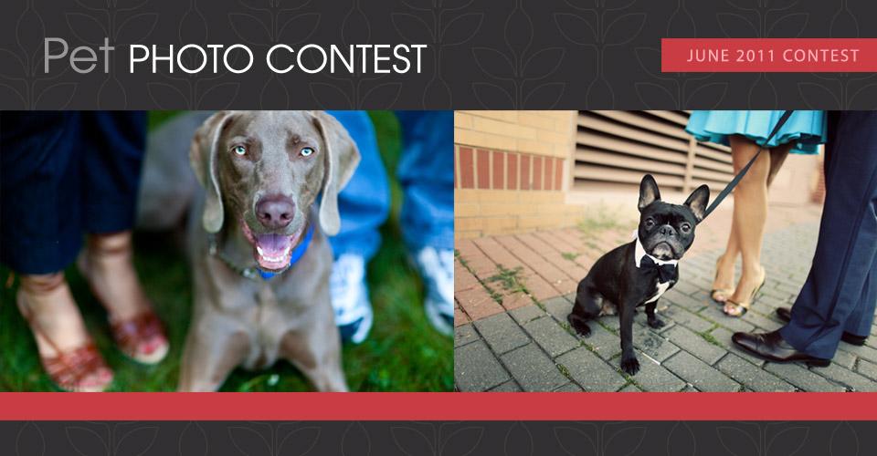 Pet-Contest